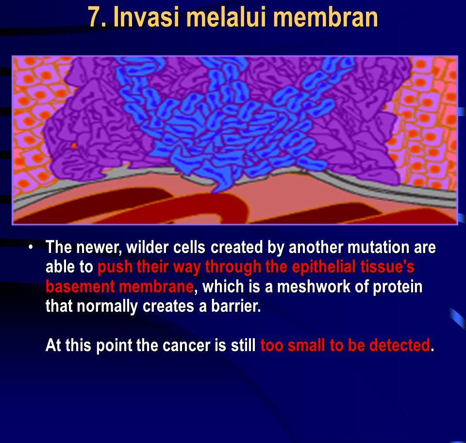 7. Invasi melalui membran