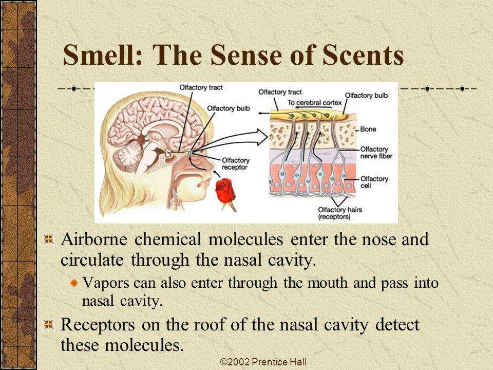 Smell: The Sense of Scents