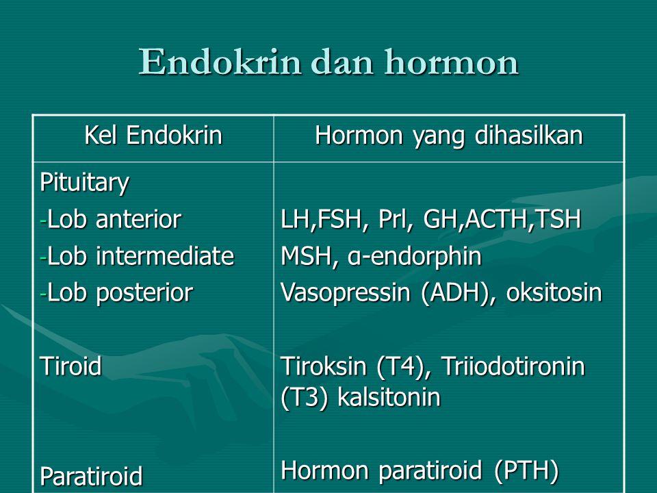 Hormon yang dihasilkan