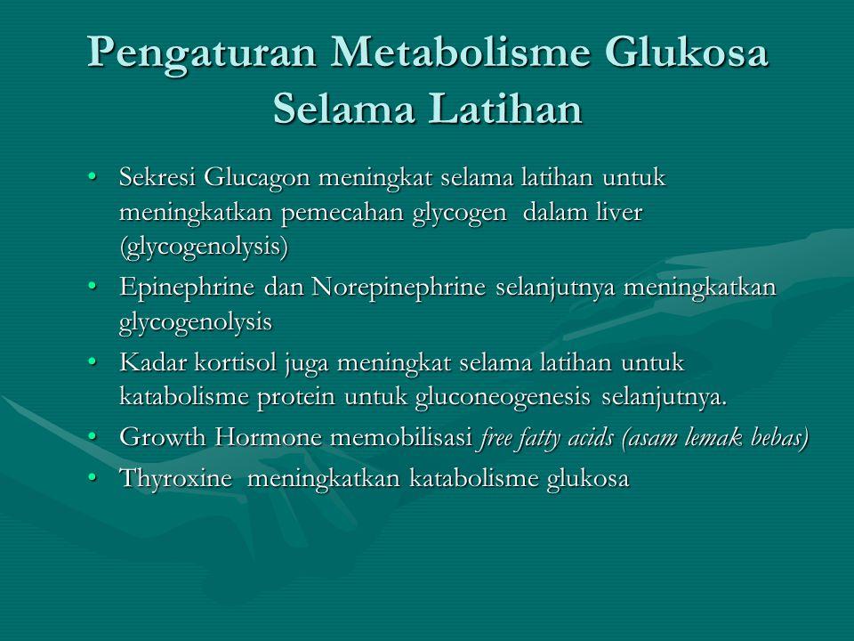 Pengaturan Metabolisme Glukosa Selama Latihan