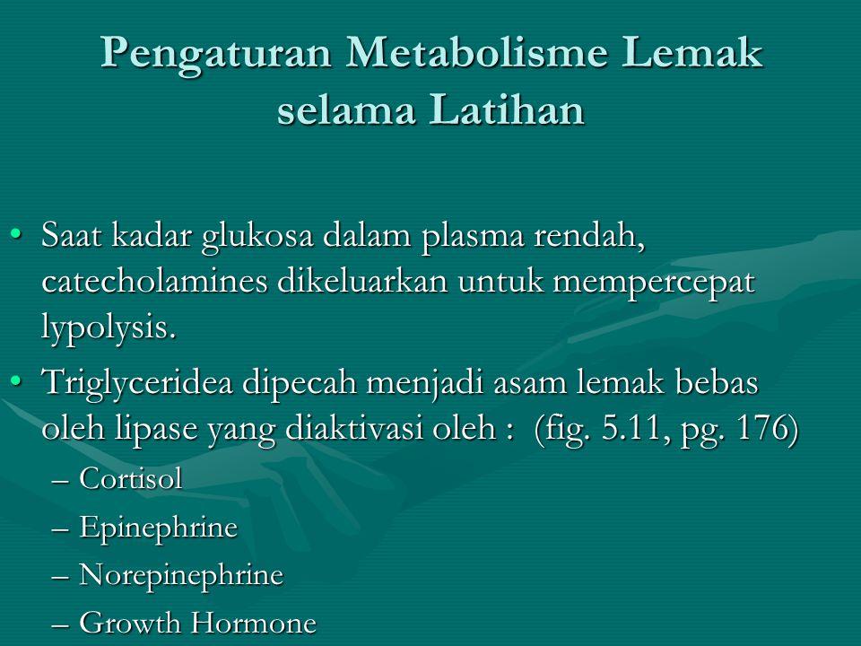 Pengaturan Metabolisme Lemak selama Latihan