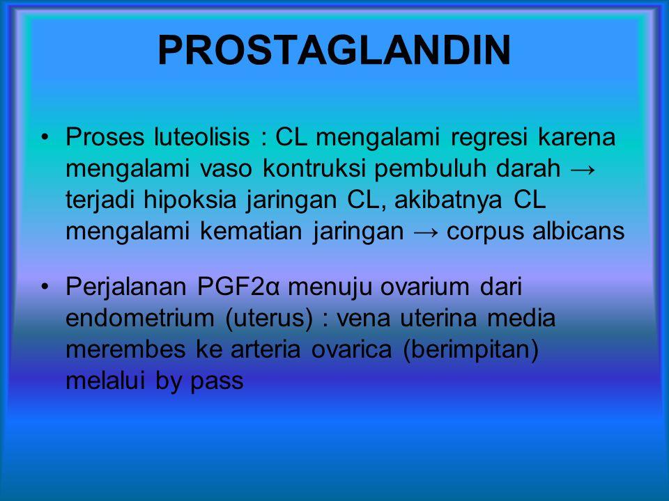 PROSTAGLANDIN