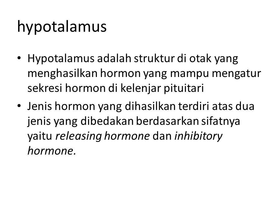 hypotalamus Hypotalamus adalah struktur di otak yang menghasilkan hormon yang mampu mengatur sekresi hormon di kelenjar pituitari.