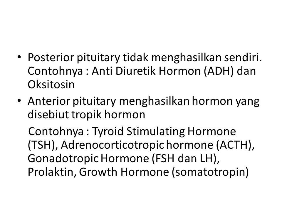 Posterior pituitary tidak menghasilkan sendiri