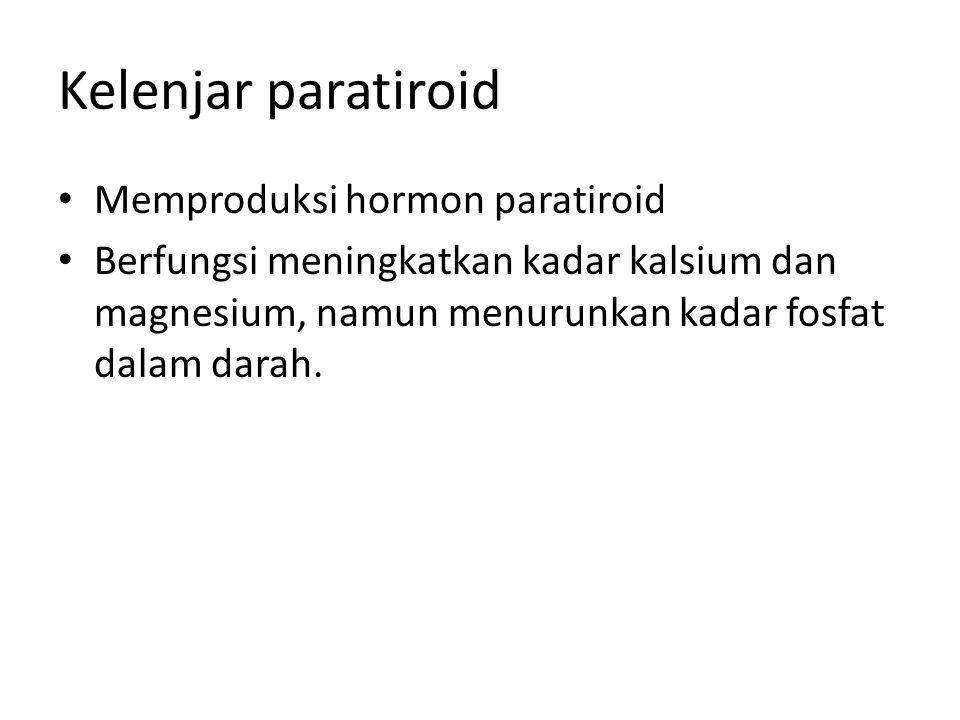 Kelenjar paratiroid Memproduksi hormon paratiroid