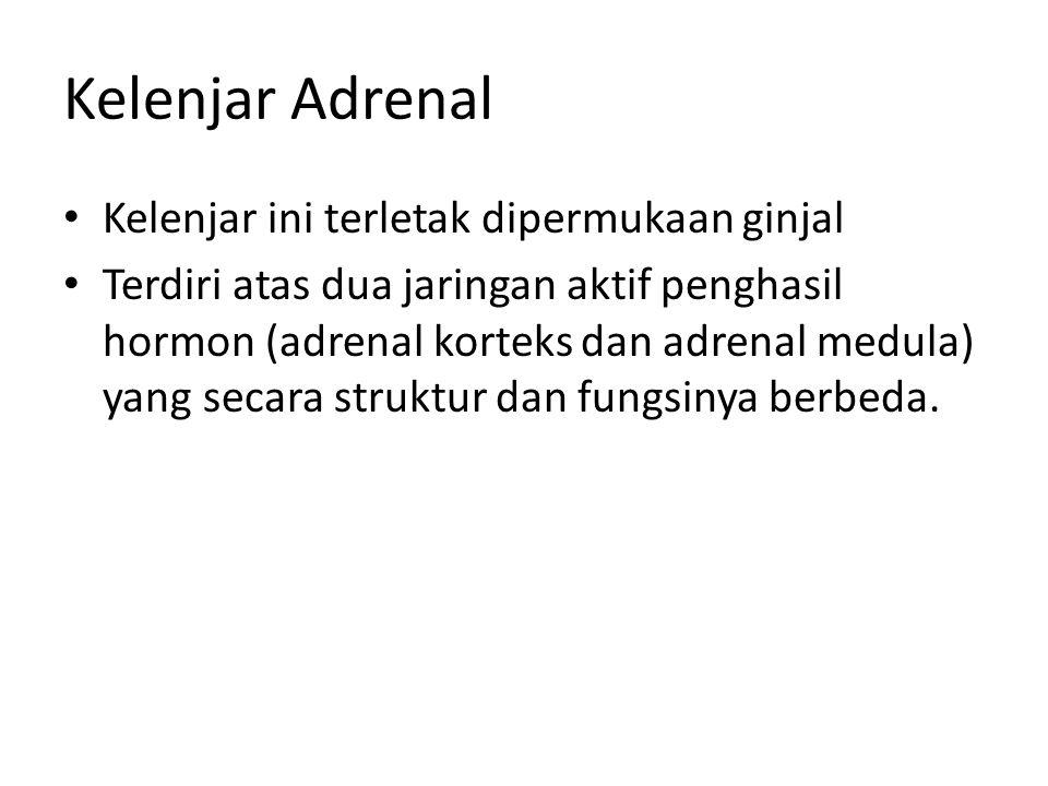 Kelenjar Adrenal Kelenjar ini terletak dipermukaan ginjal
