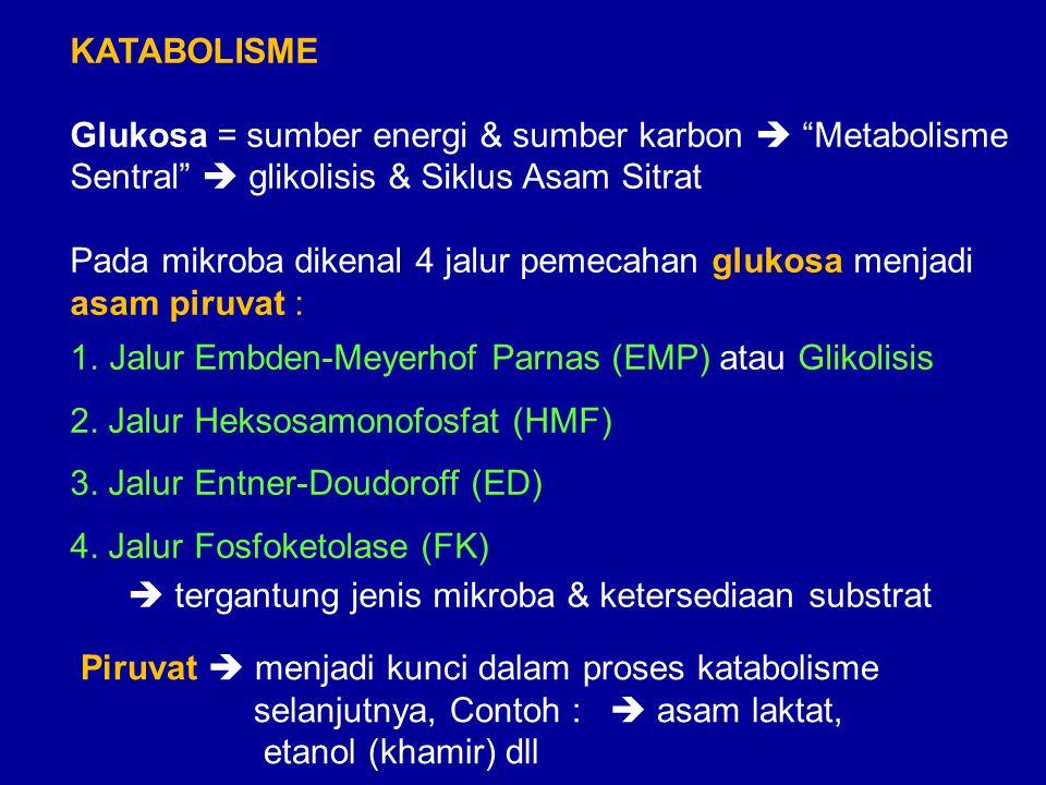 KATABOLISME Glukosa = sumber energi & sumber karbon  Metabolisme. Sentral  glikolisis & Siklus Asam Sitrat.