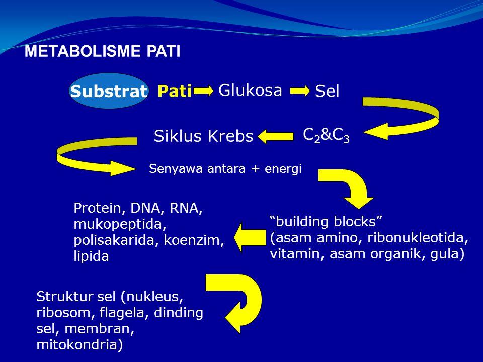 METABOLISME PATI Substrat Pati Glukosa Sel Siklus Krebs C2&C3