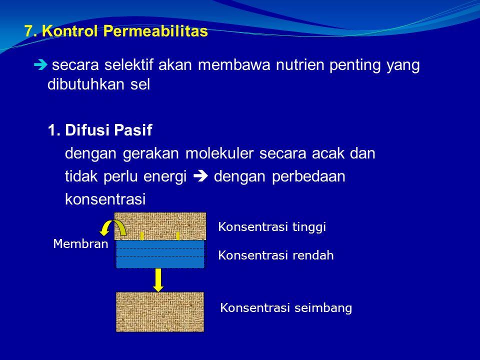 7. Kontrol Permeabilitas