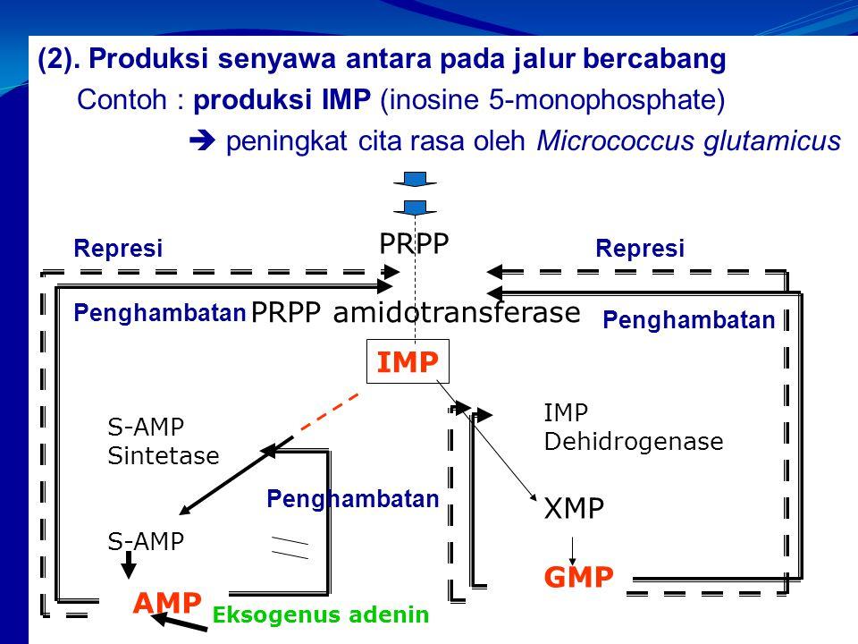 PRPP amidotransferase
