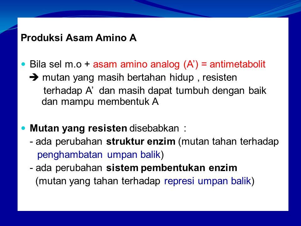 Produksi Asam Amino A Bila sel m.o + asam amino analog (A') = antimetabolit.  mutan yang masih bertahan hidup , resisten.