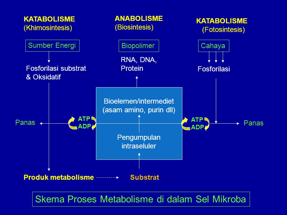 Bioelemen/intermediet