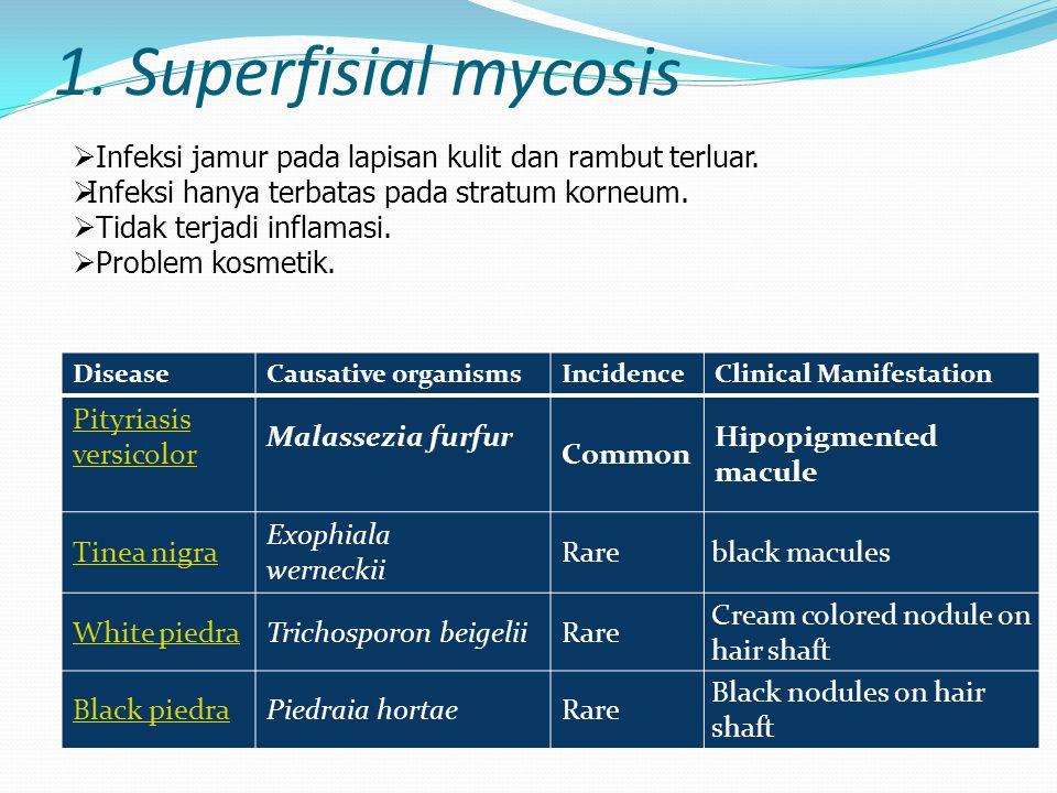 1. Superfisial mycosis Infeksi jamur pada lapisan kulit dan rambut terluar. Infeksi hanya terbatas pada stratum korneum.
