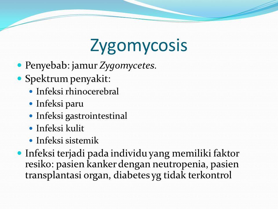 Zygomycosis Penyebab: jamur Zygomycetes. Spektrum penyakit: