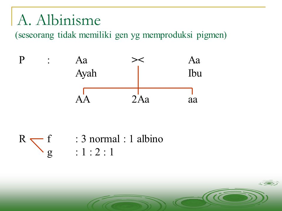 A. Albinisme P : Aa >< Aa Ayah Ibu AA 2Aa aa
