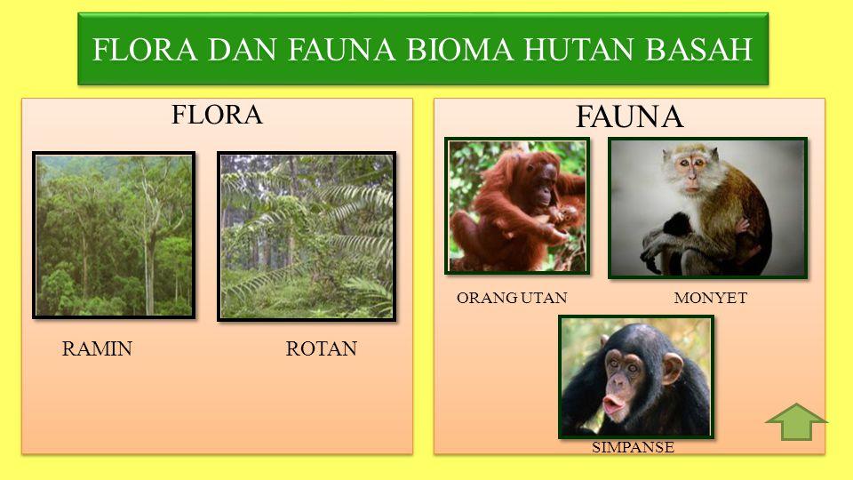 FLORA DAN FAUNA BIOMA HUTAN BASAH