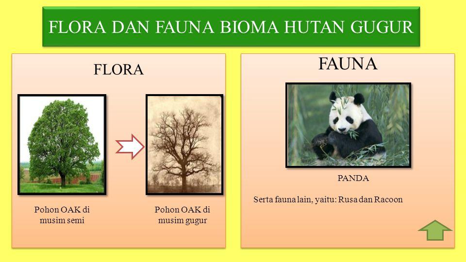 FLORA DAN FAUNA BIOMA HUTAN GUGUR