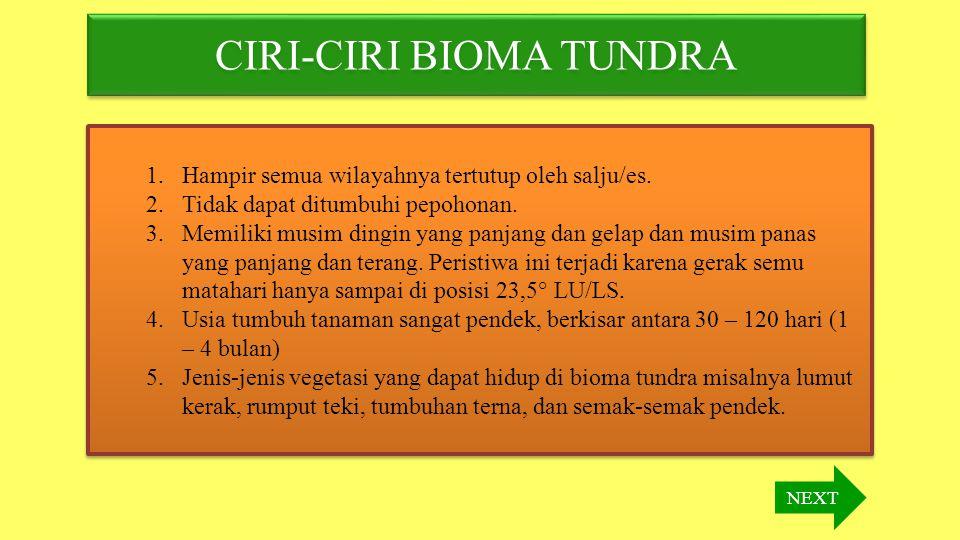 CIRI-CIRI BIOMA TUNDRA