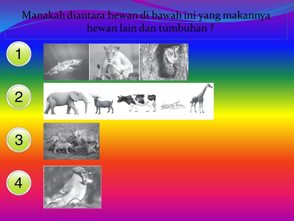 Manakah diantara hewan di bawah ini yang makannya hewan lain dan tumbuhan