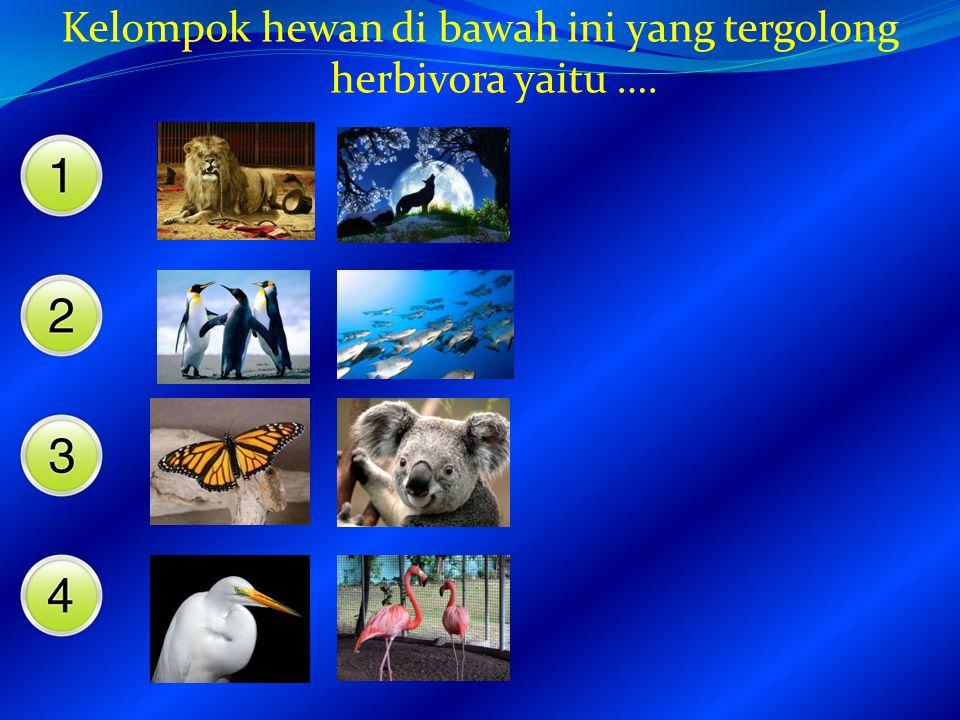Kelompok hewan di bawah ini yang tergolong herbivora yaitu ….