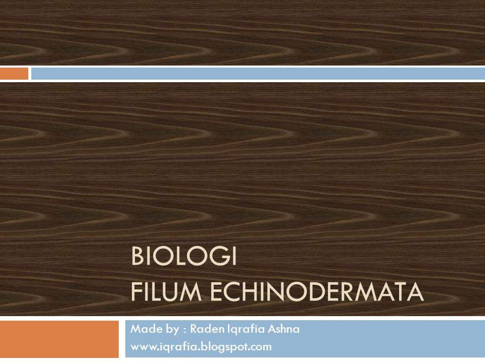 Biologi Filum Echinodermata
