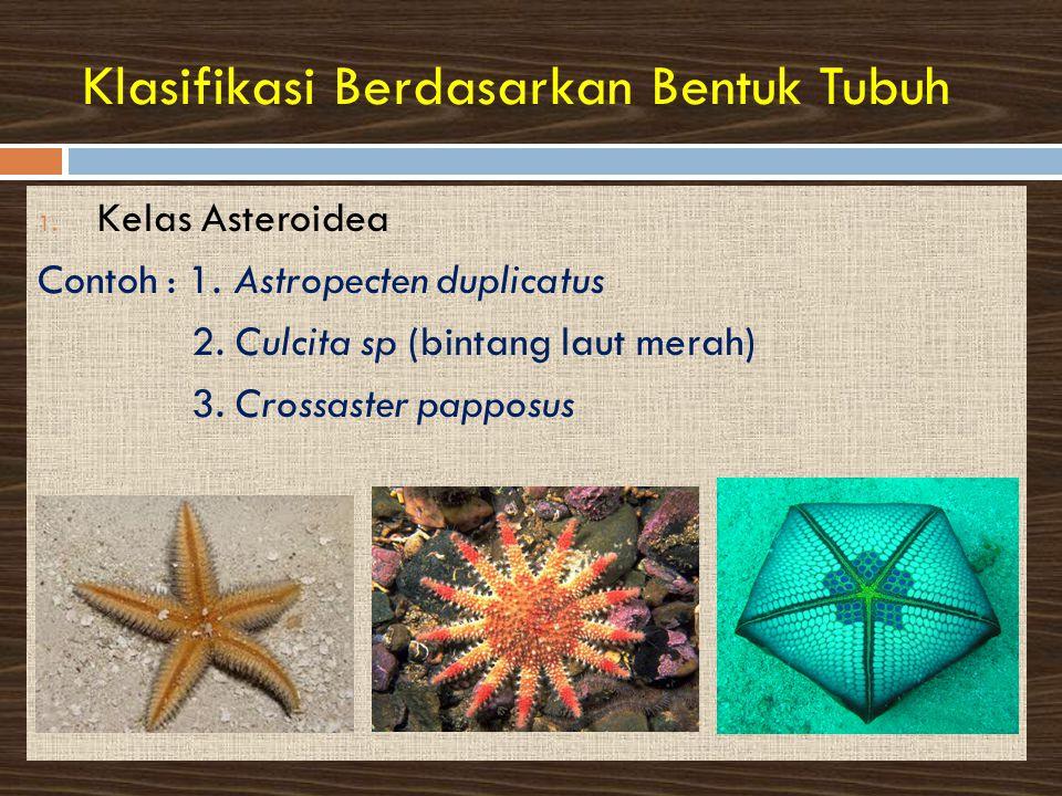 Klasifikasi Berdasarkan Bentuk Tubuh