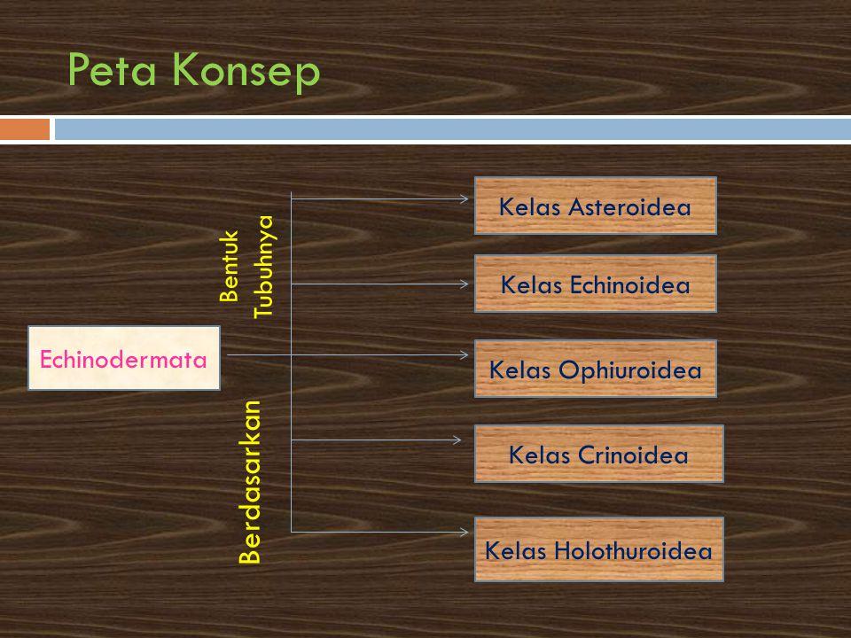 Peta Konsep Berdasarkan Kelas Asteroidea Bentuk Tubuhnya