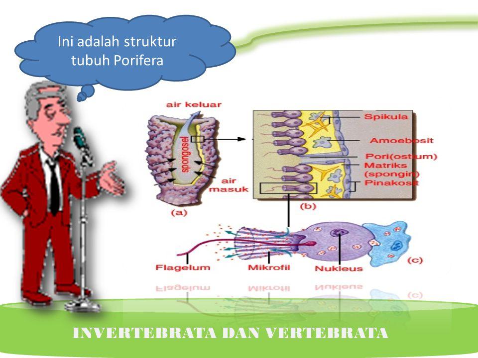 Ini adalah struktur tubuh Porifera