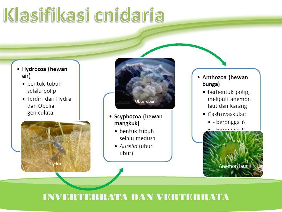 Klasifikasi cnidaria INVERTEBRATA DAN VERTEBRATA Hydrozoa (hewan air)
