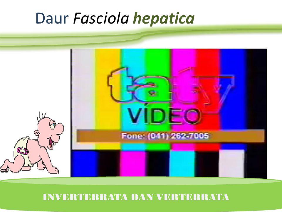 Daur Fasciola hepatica