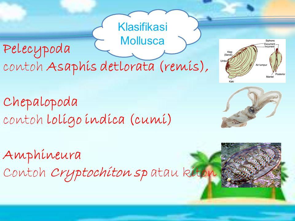 contoh Asaphis detlorata (remis), Chepalopoda