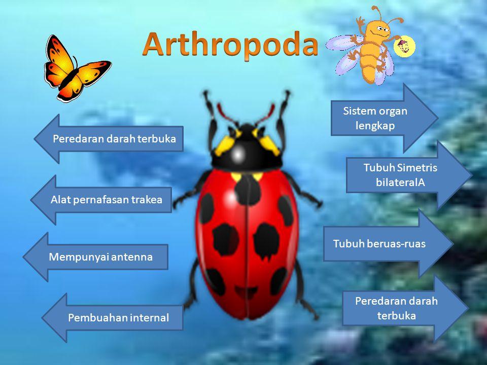 Arthropoda Sistem organ lengkap Peredaran darah terbuka