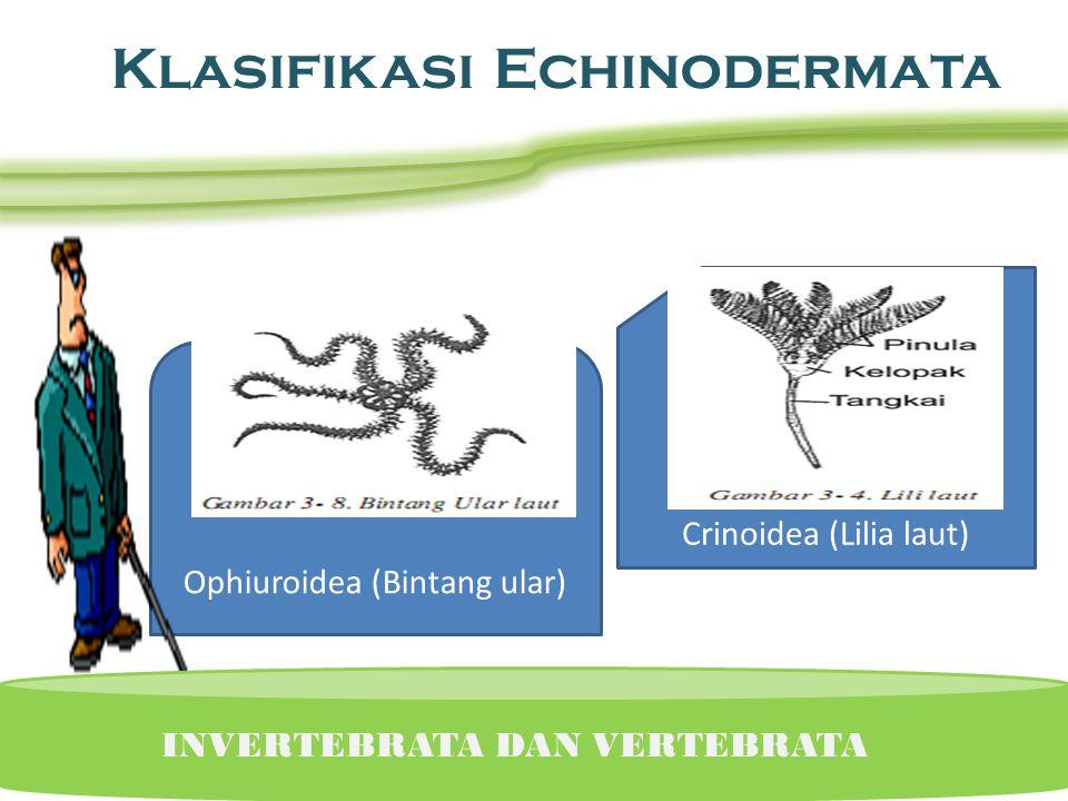 Klasifikasi Echinodermata