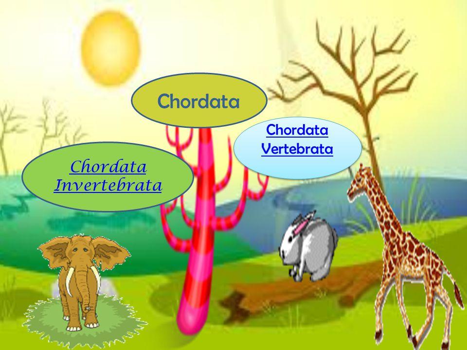 Chordata Chordata Vertebrata Chordata Invertebrata