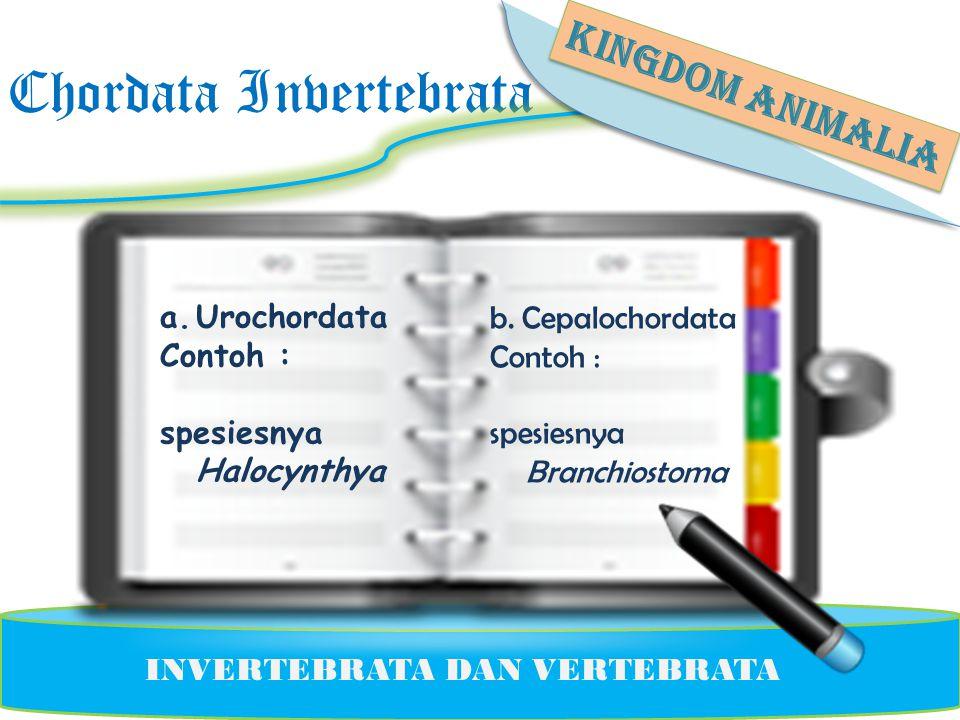 Chordata Invertebrata