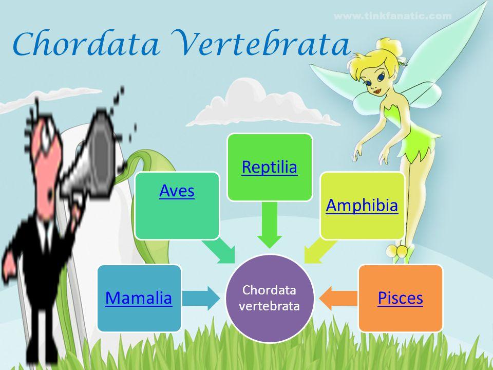 Chordata Vertebrata Chordata vertebrata Mamalia Aves Reptilia Amphibia