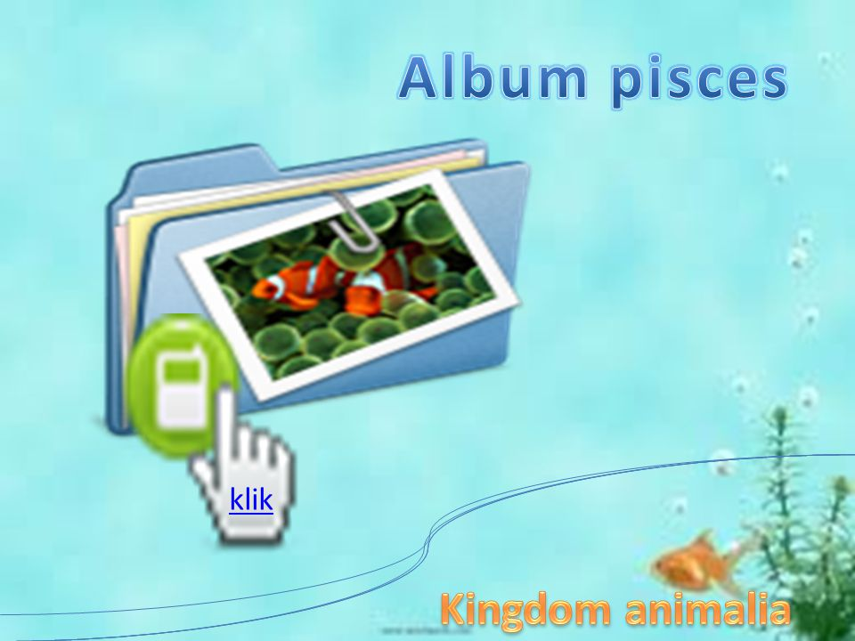 Album pisces klik Kingdom animalia