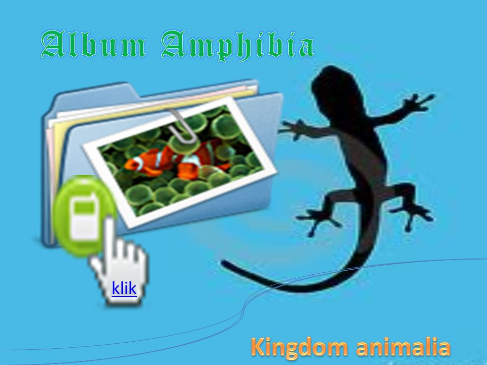 Album Amphibia klik Kingdom animalia