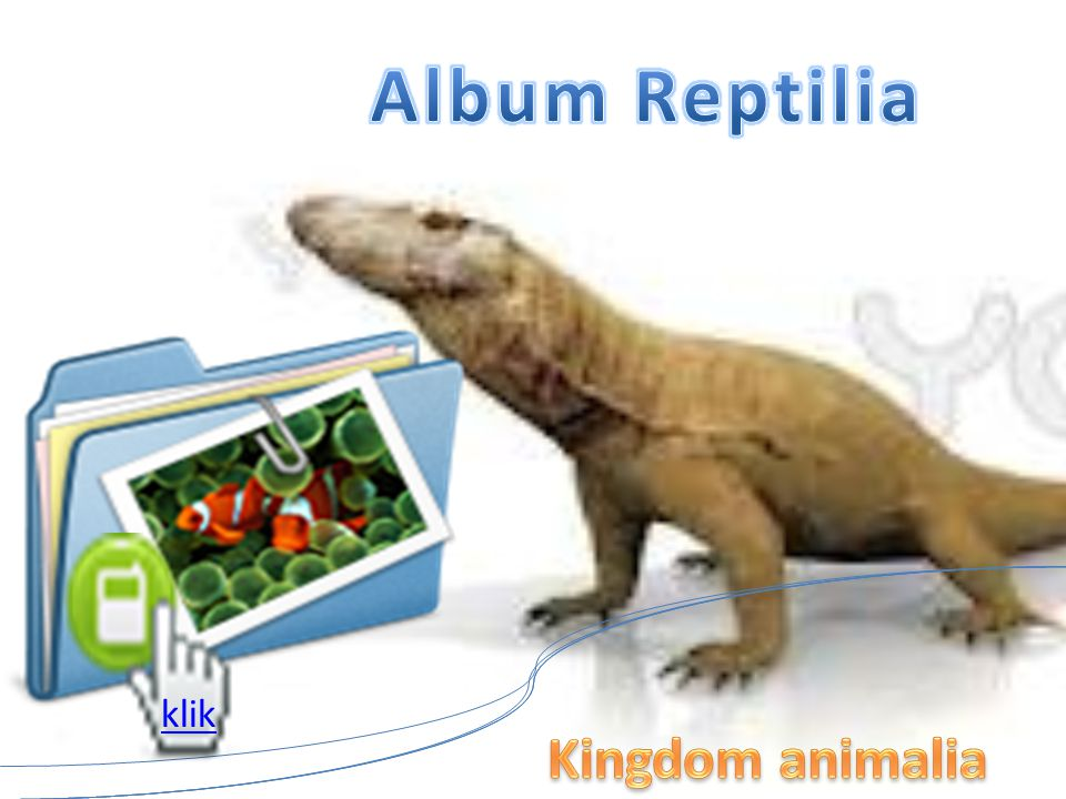 Album Reptilia klik Kingdom animalia