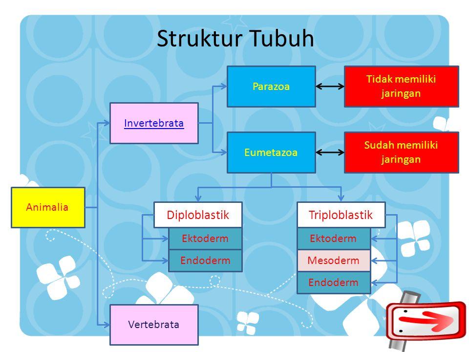 Struktur Tubuh Diploblastik Triploblastik Parazoa