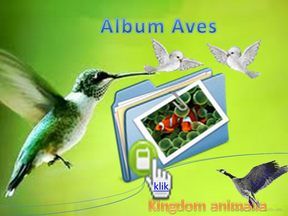 Album Aves klik Kingdom animalia