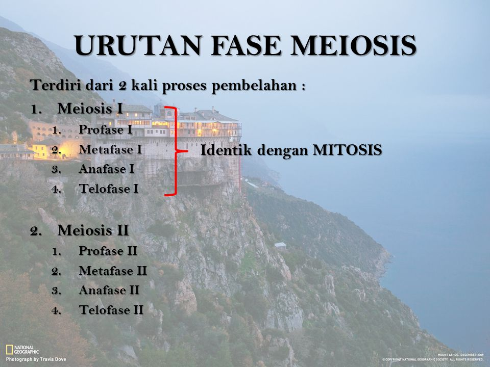 URUTAN FASE MEIOSIS Terdiri dari 2 kali proses pembelahan : Meiosis I