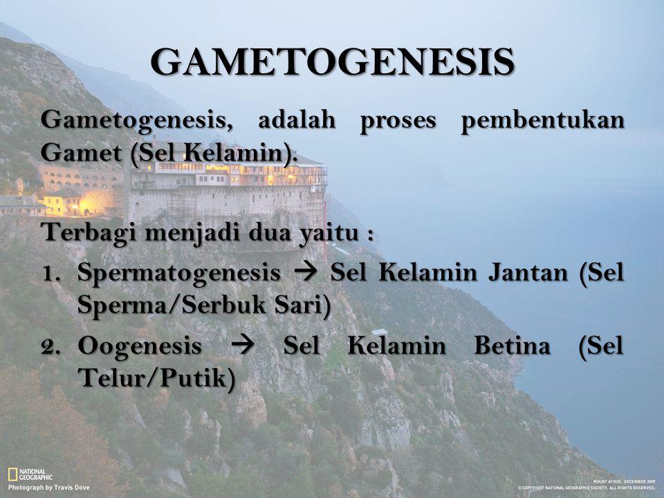 GAMETOGENESIS Gametogenesis, adalah proses pembentukan Gamet (Sel Kelamin). Terbagi menjadi dua yaitu :