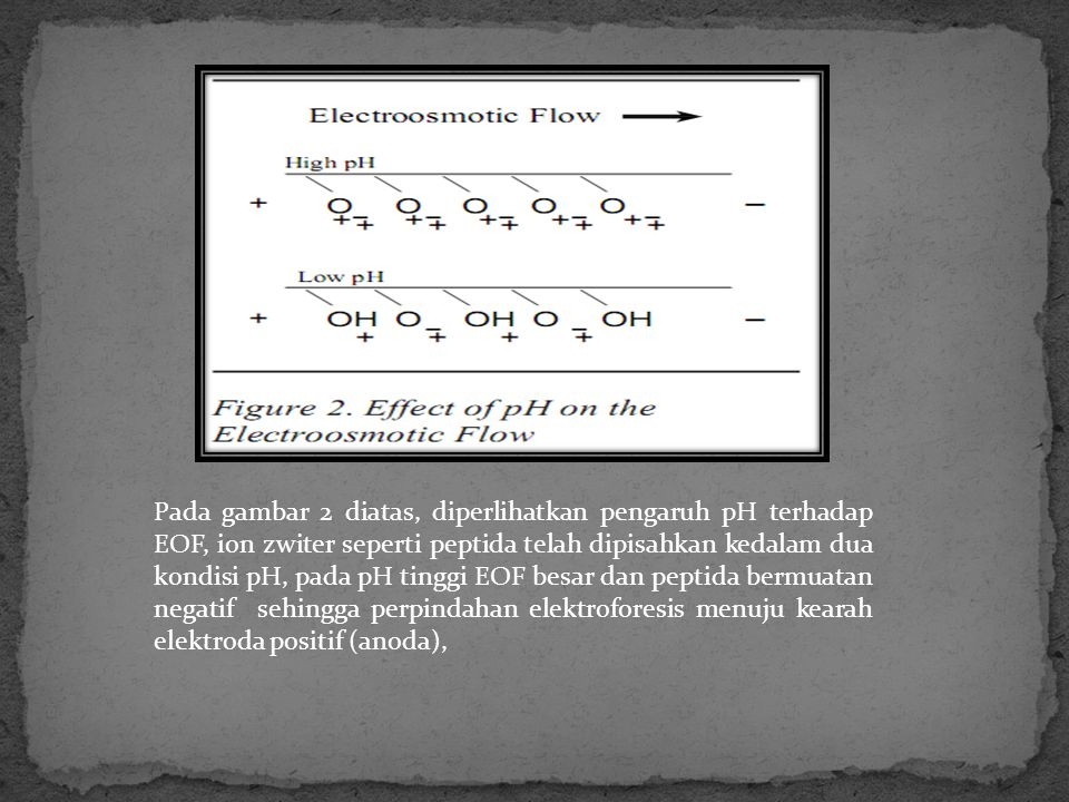 Pada gambar 2 diatas, diperlihatkan pengaruh pH terhadap EOF, ion zwiter seperti peptida telah dipisahkan kedalam dua kondisi pH, pada pH tinggi EOF besar dan peptida bermuatan negatif sehingga perpindahan elektroforesis menuju kearah elektroda positif (anoda),