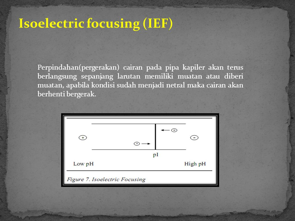 Isoelectric focusing (IEF)