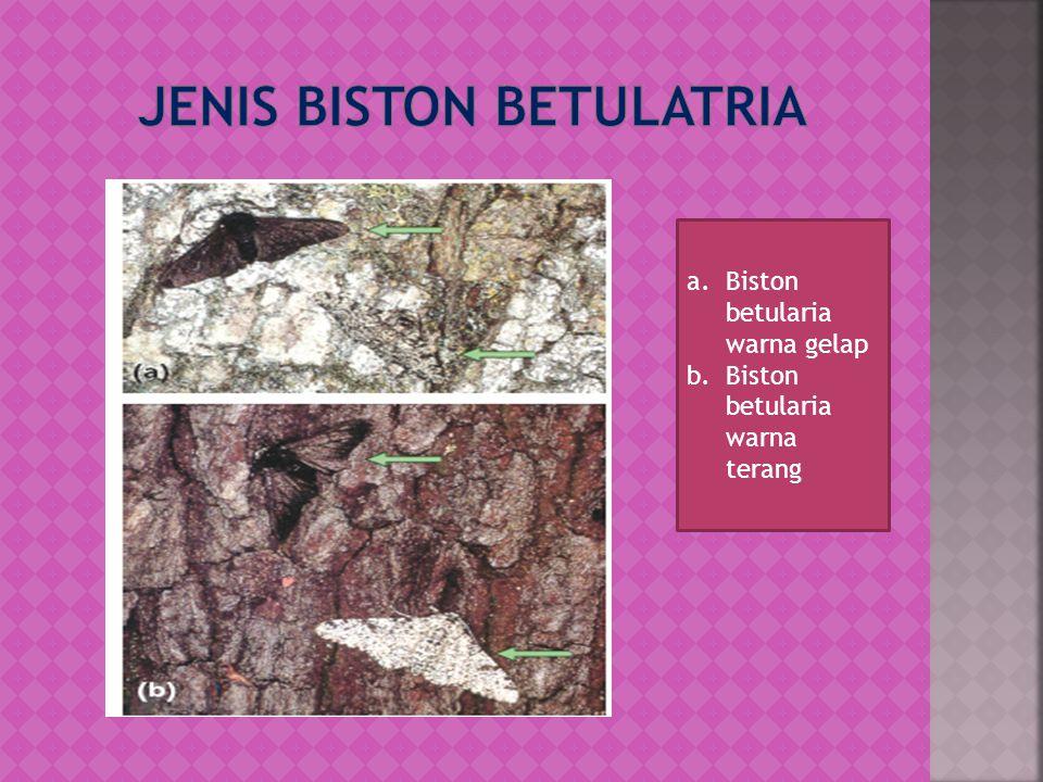 Jenis Biston betulatria