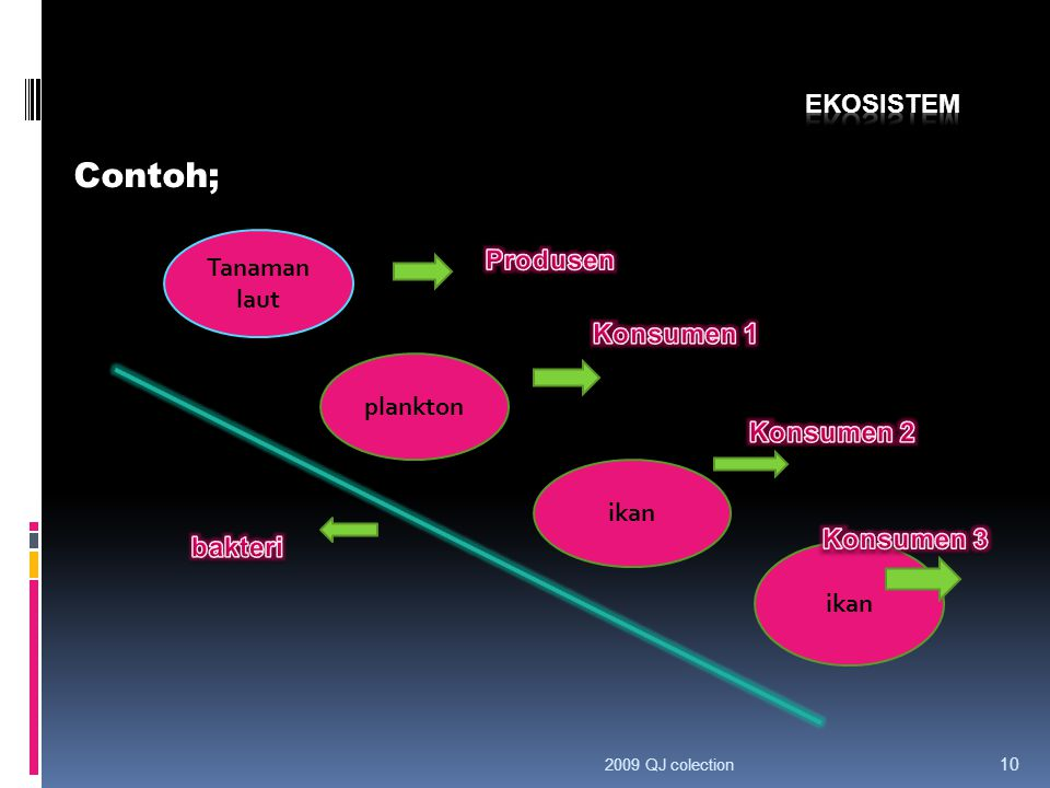 Contoh; Ekosistem Tanaman laut Produsen Konsumen 1 plankton Konsumen 2