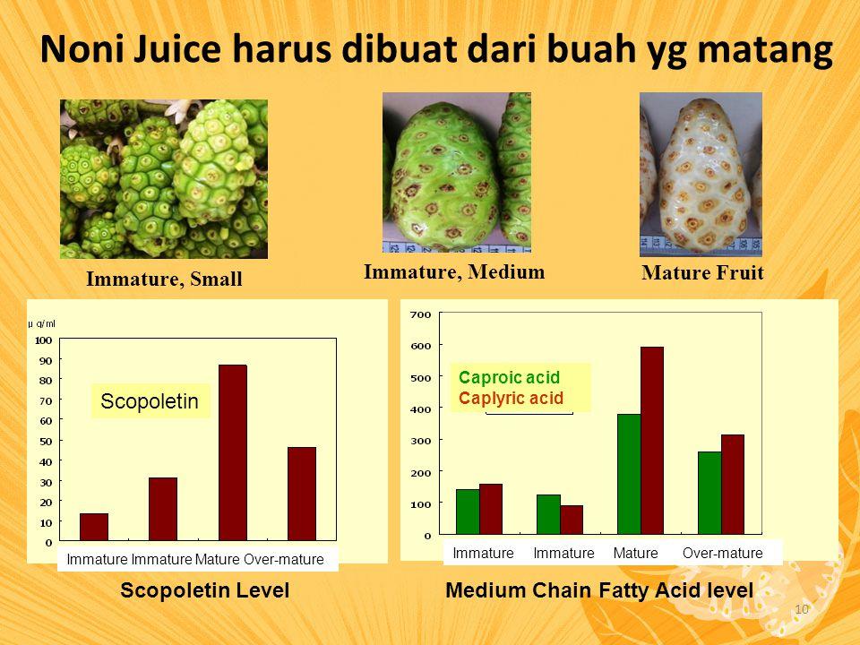 Noni Juice harus dibuat dari buah yg matang