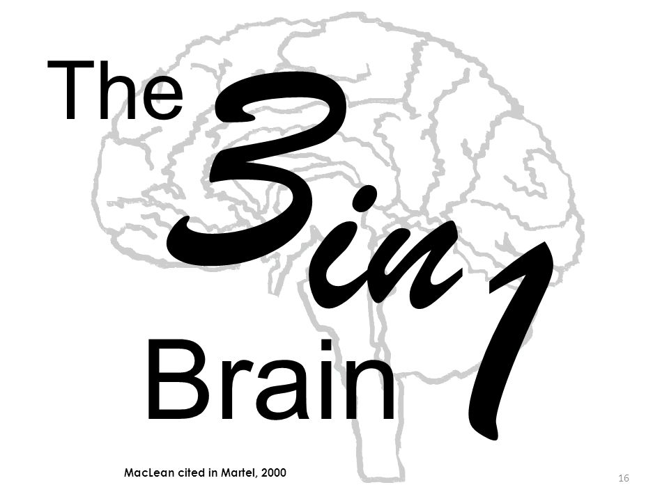 3 The in 1 Brain MacLean cited in Martel, 2000