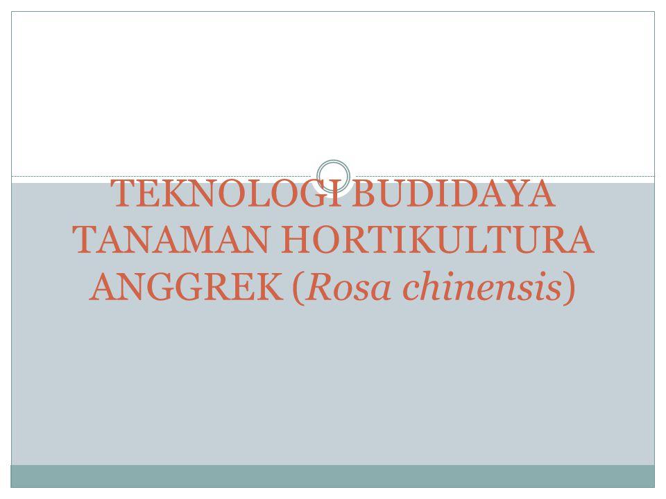 TEKNOLOGI BUDIDAYA TANAMAN HORTIKULTURA ANGGREK (Rosa chinensis)